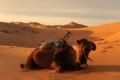 camel ride dunes merzouga