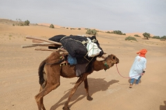 camel rekking with berbere guide