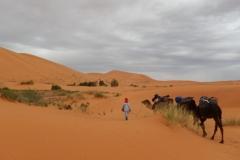 camel trek sahara desert morocco