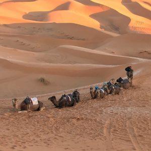 Camel ride over dunes of erg chebbi desert, Morocco