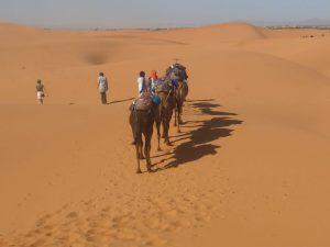 camel trekking dunes erg chebbi